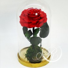 Роза ⌀10 в колбе красная