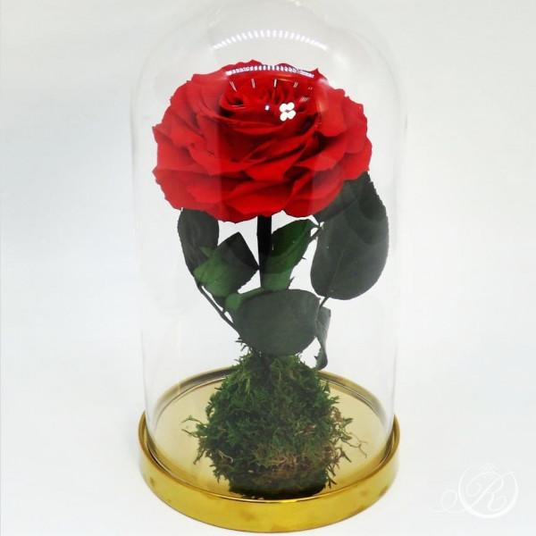 Красная роза в колбе ⌀10 Maxi