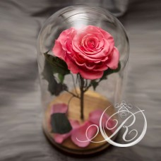 Роза ⌀10 в колбе розовая