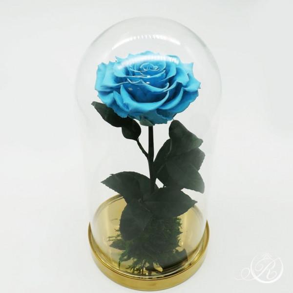 Роза в колбе голубая