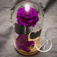 Роза ⌀10 в колбе фиолетовая