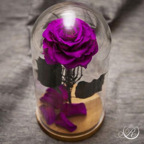 Роза в колбе фиолетовая ⌀10 Maxi