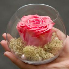 Бутон розы в малом шаре