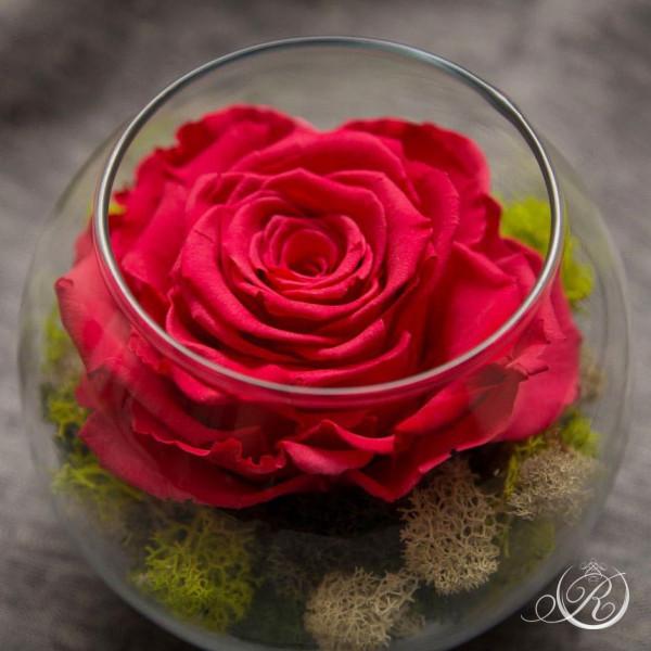 Бутон розы в среднем шаре
