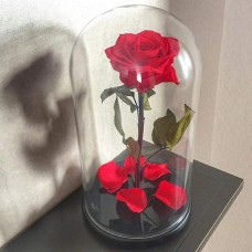 Роза ⌀8 в колбе красная