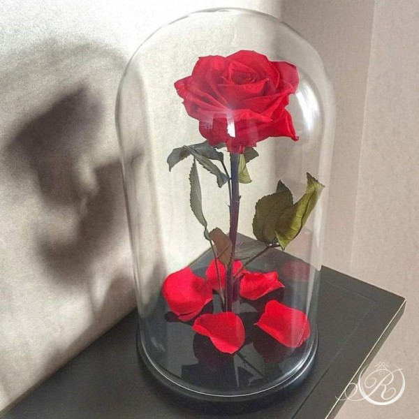 Красная роза ⌀8 в колбе Standart