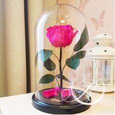 Роза ⌀8 в колбе розовая фуксия