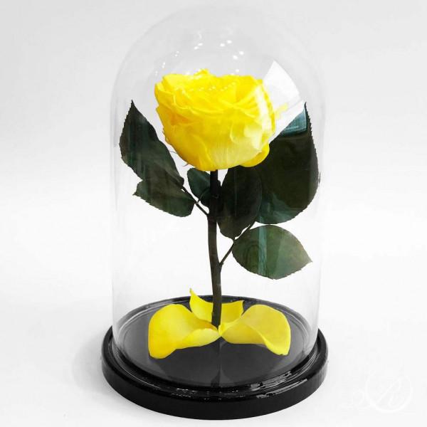 Желтая роза ⌀8 в колбе Standart