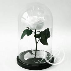 Роза ⌀8 белая в колбе
