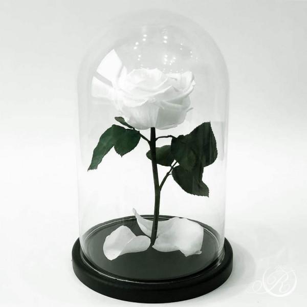 Роза в колбе белая ⌀8 в колбе Standart