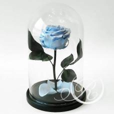 Роза ⌀8 голубая в колбе
