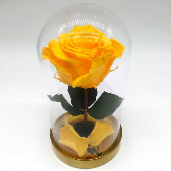 Роза желтая ⌀6 в колбе Mini
