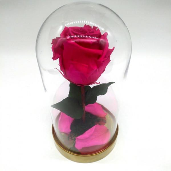 Роза малиновая ⌀6 в колбе Mini
