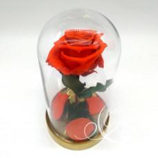 Роза ⌀6 в колбе оранжевая