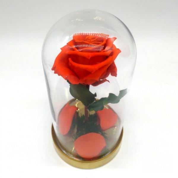 Роза оранжевая ⌀6 в колбе Mini
