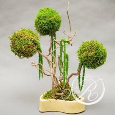 Дерево в стиле Бонсай #16