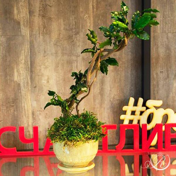 """Дерево в стиле """"Бонсай"""" #18"""